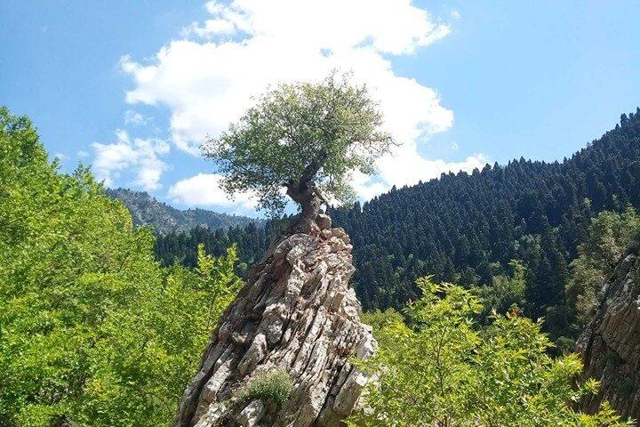THE TREE OF HOPE. Argithea Karditsa Greece Photo: Maroulis Chrysanthos.